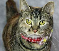 Momo is available for adoption through the Kentucky Humane Society