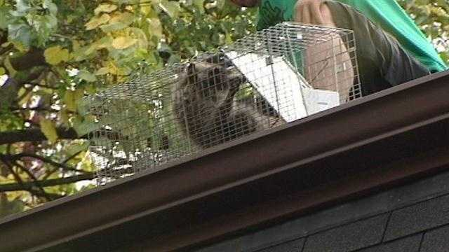 More calls to remove furry intruders from homes