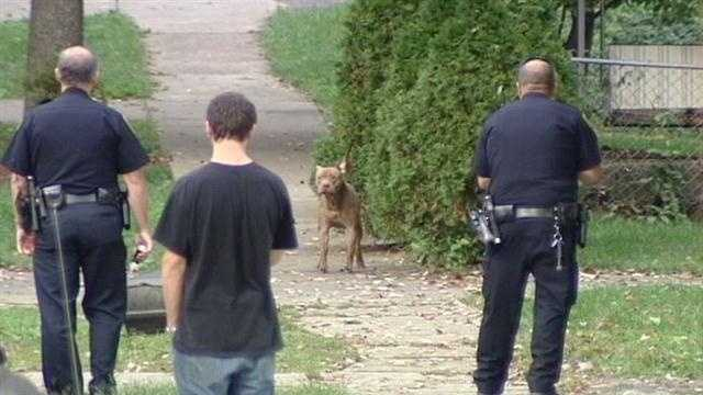 Loose dog attacks 3 in Madisonville