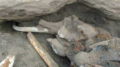 Woolly mammoth find