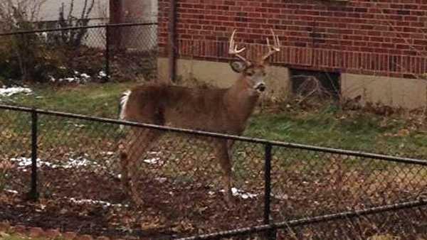deer in yard.jpg