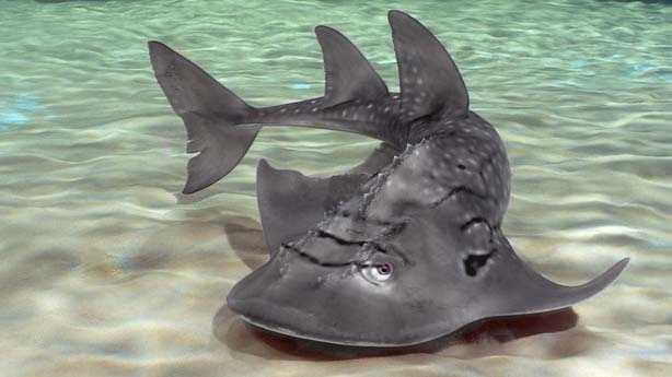 Shark Ray.jpg