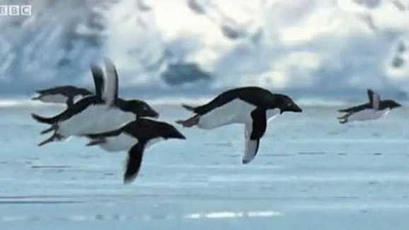 April-Fools---Flying-Penguins-jpg.jpg