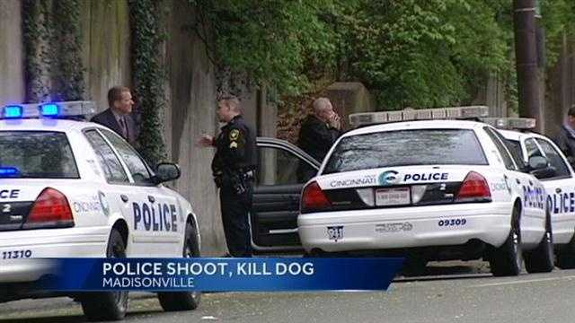 Portions of Erie Avenue were shut down Wednesday afternoon in Madisonville after police shot a dog during a domestic dispute.