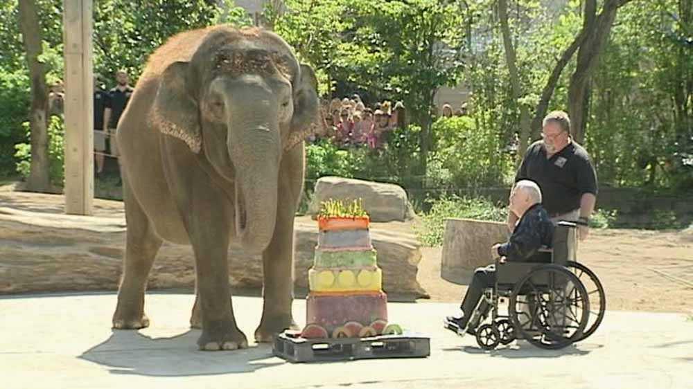 Elephant turns 40 14.jpg