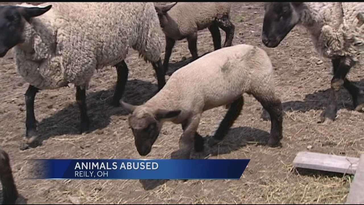 A Butler County family is looking for answers after someone killed some of their animals and wounded others.