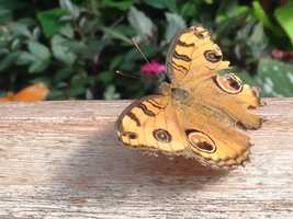 Butterfly Show, Mother's Day SpecialKrohn ConservatorySunday, May 10 - 10 a.m. to 5 p.m.Take mom to the beautiful butterfly exhibit at the conservatory for a day of free fun! Mom's gift is free admission, but bring the whole family!Find more info here