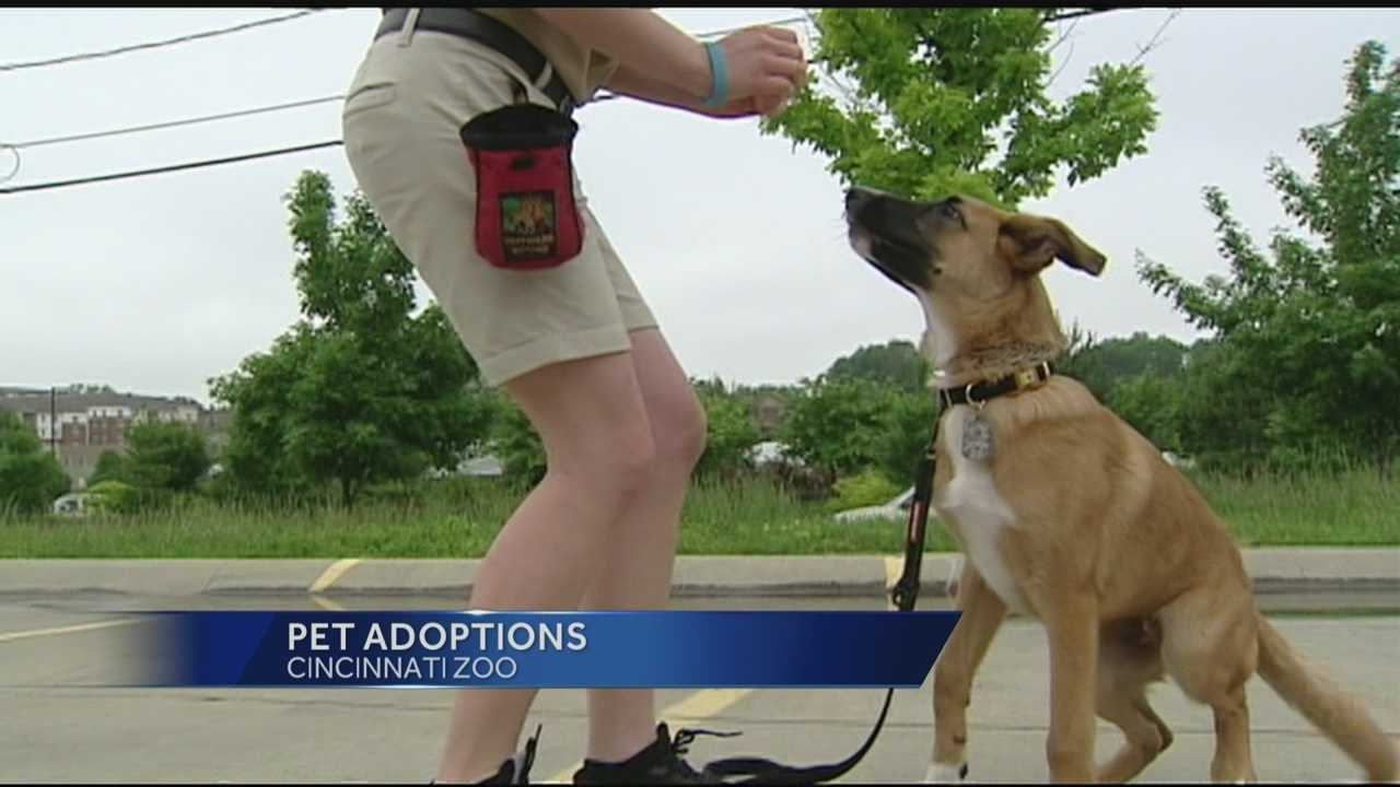 Zoo hosts mega dog adoption event