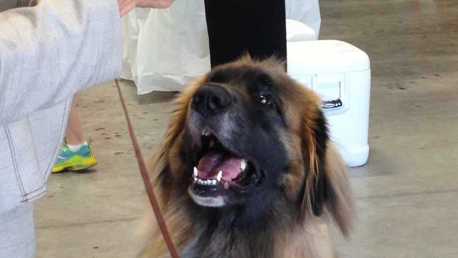 Dog Show Butler County Fairgrounds
