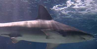 11. Visit the Newport Aquarium and pet the sharks at Shark Central.