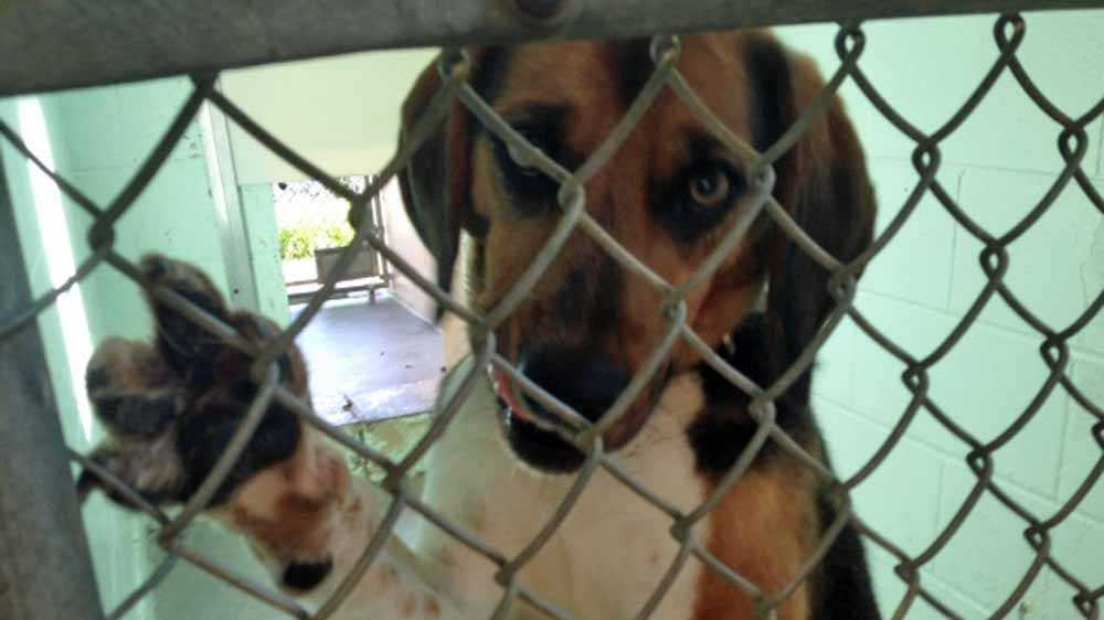 Boone Co. pet adoption (2).jpg