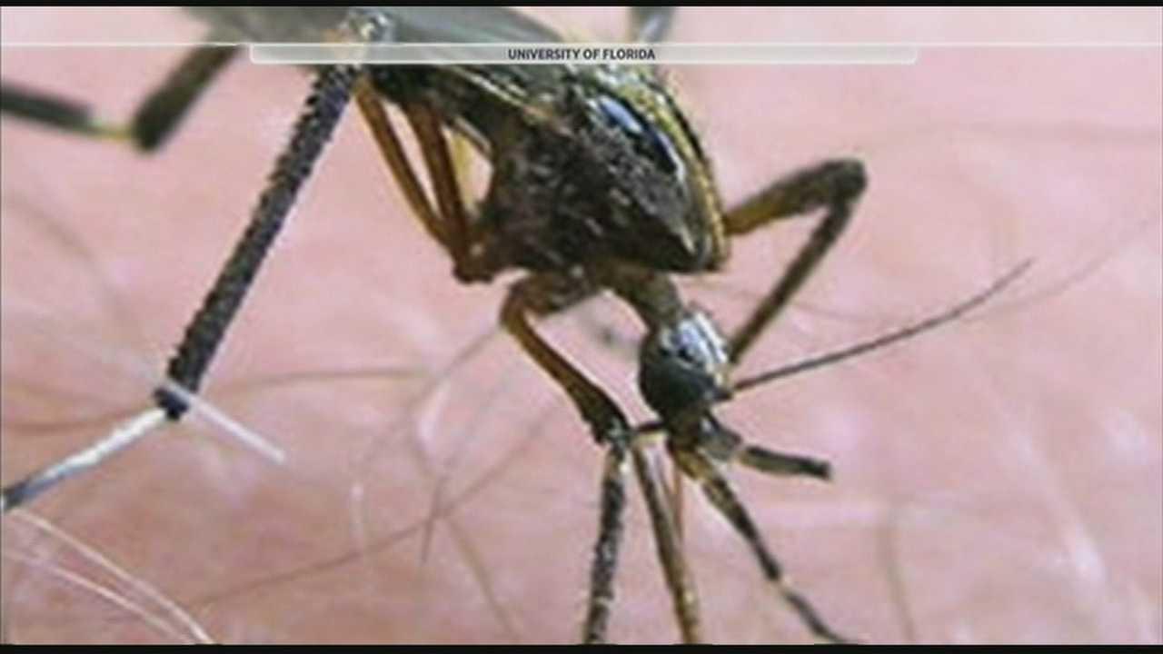 Mosquitoes are out in full force this summer season