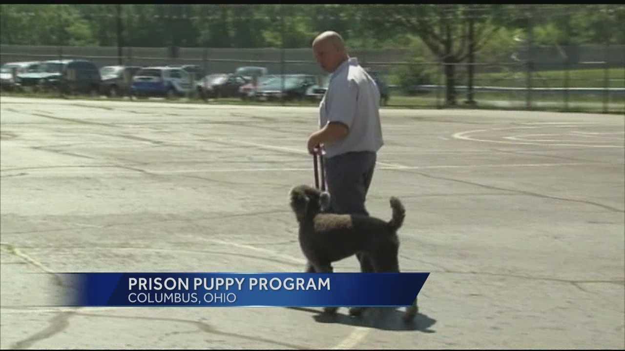puppy program.jpg