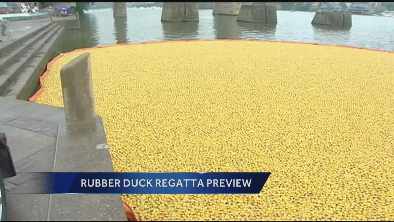 081513 regatta ducks