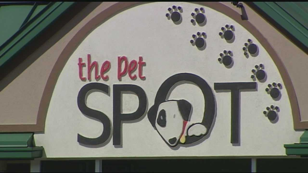 Norwood pet day care temporarily closed after dog illnesses, deaths