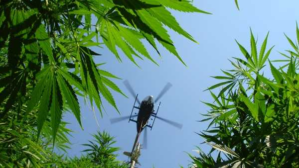 helicopter over pot plants