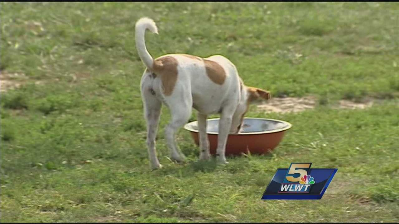 Vets investigate if circovirus is behind mystery dog deaths