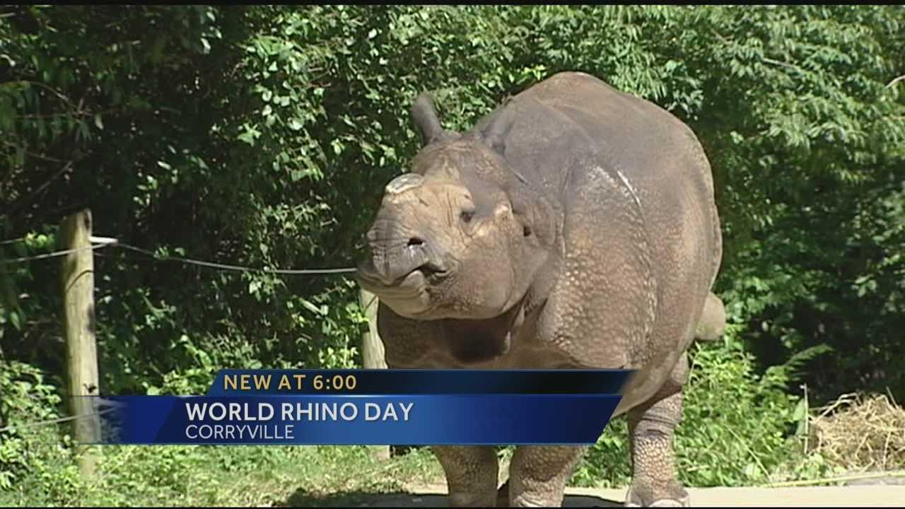 rhino day.jpg