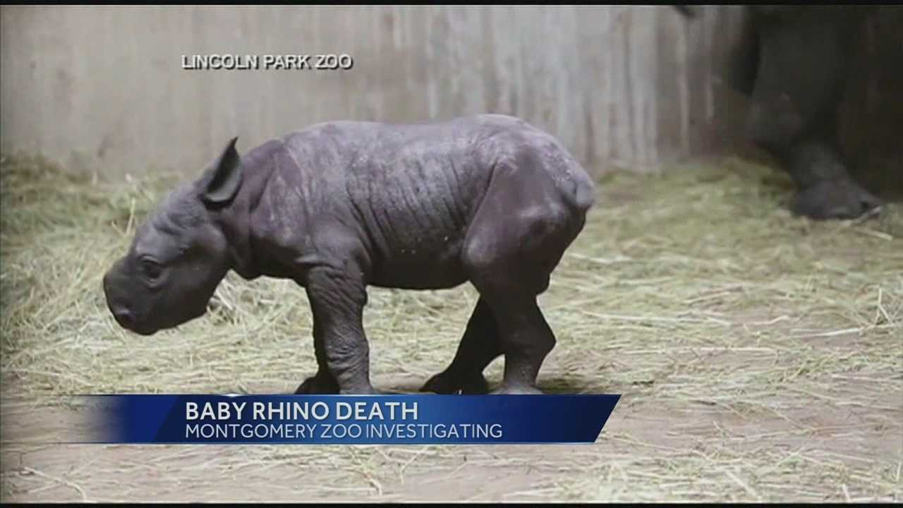baby rhino.jpg