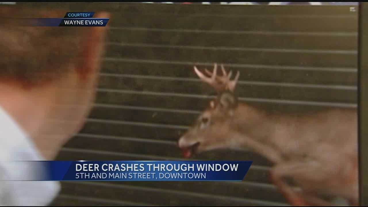 Deer smashes into window at Federal Reserve parking garage