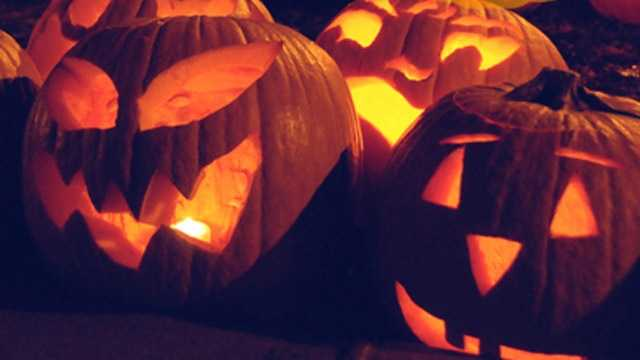 Pumpkin carving is big part of this festival. Even the giant pumpkins will be carved on Saturday.