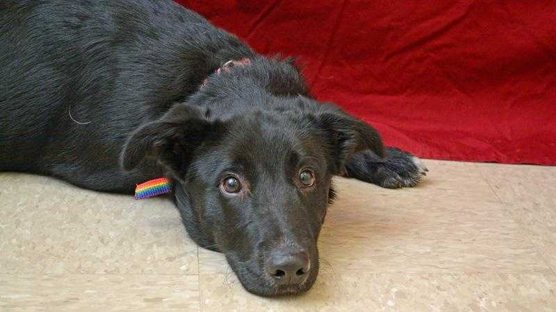 butler county dog adoption event.jpg