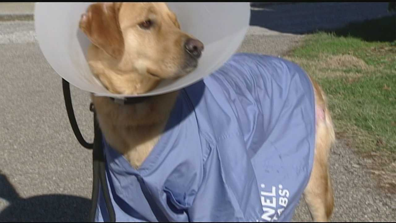 NKY animal hospital looking for help as it treats burned patient