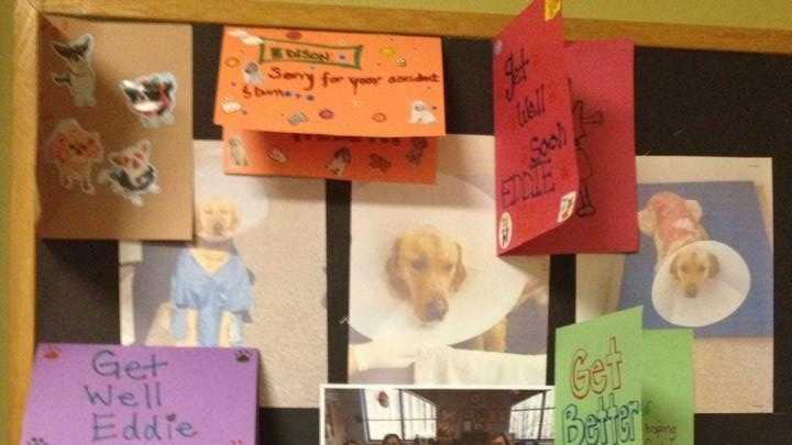 cards for eddie the dog