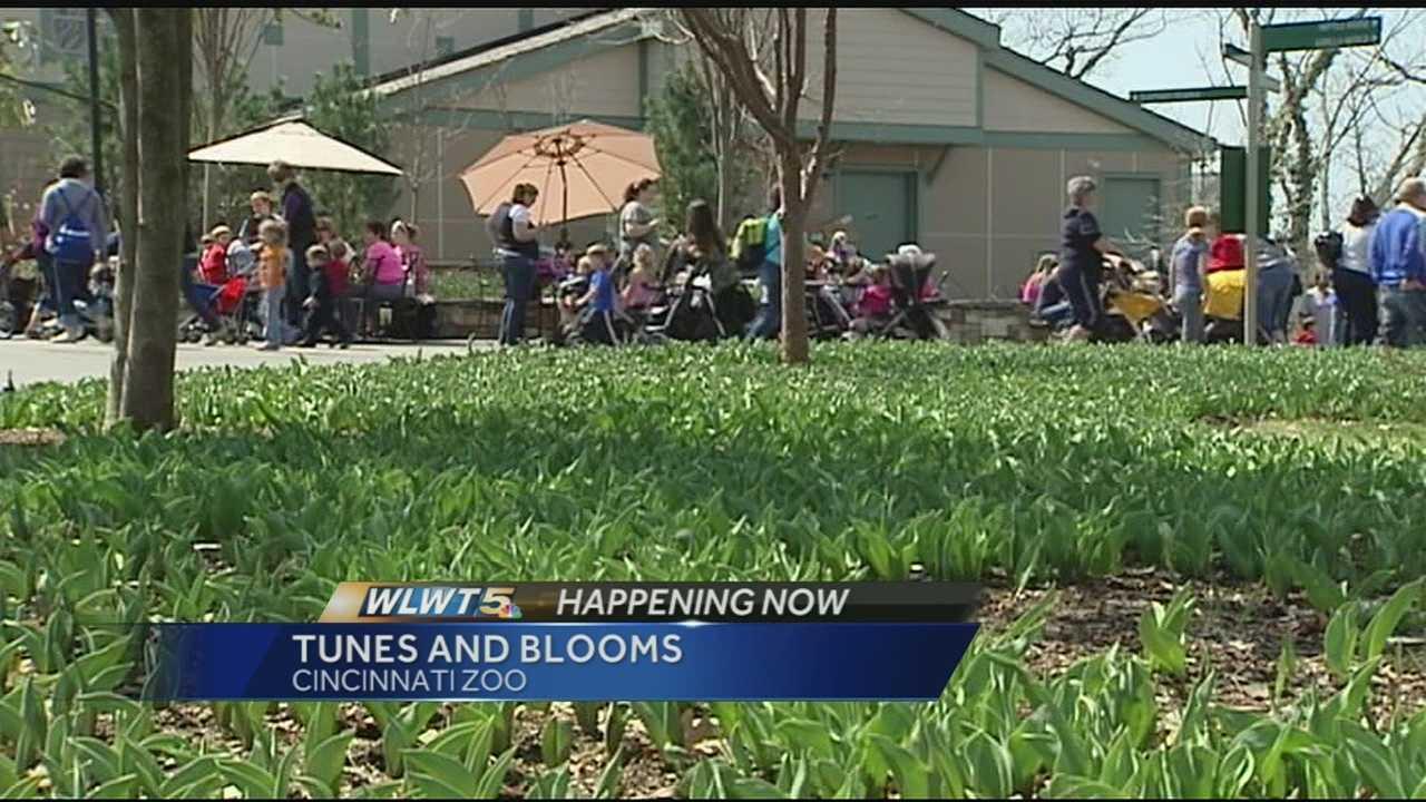 Tunes and Blooms being held at Cincinnati Zoo