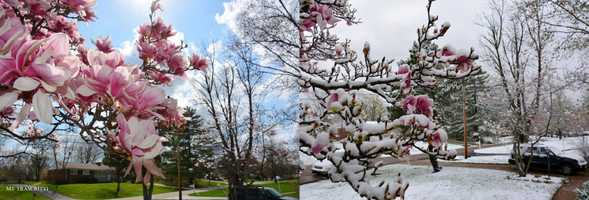 April 12 and April 15