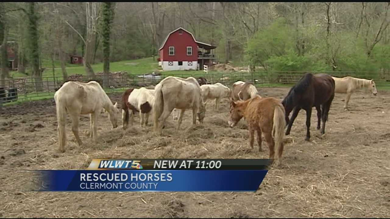 Woman, organization step up to nurse horses back to health