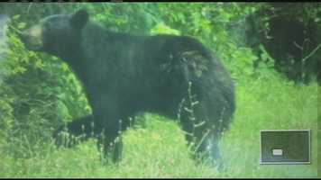 With many sighting of a black bear roaming in Clermont County, officials continue to search and encourage people who are helping to use caution.