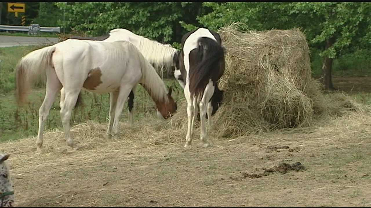 The horses were taken from Larry Browning's farm in April after authorities discovered nearly 50 dead horses at the farm. They were adopted after months of being nursed back to health.