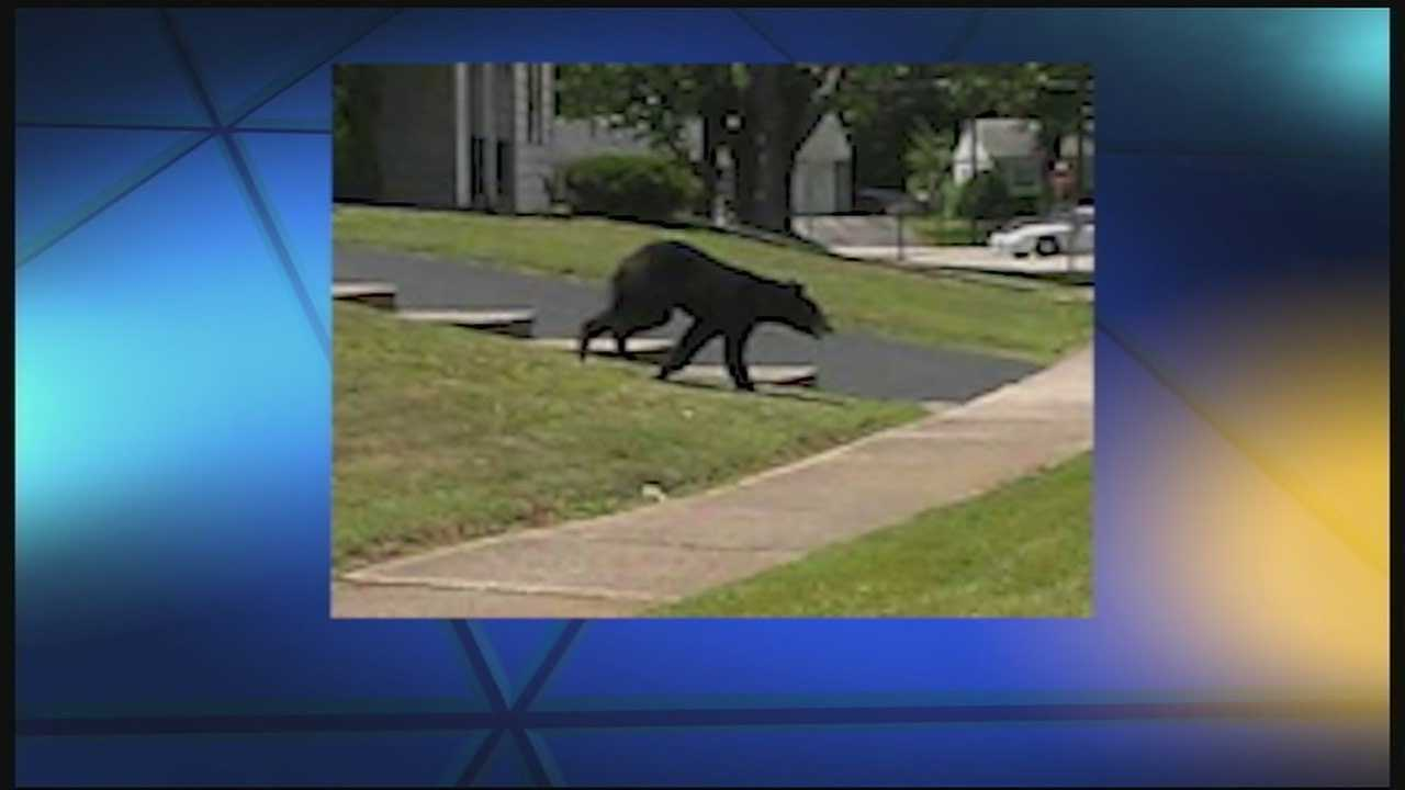The bear was reportedly spotted along East Tech Drive in Eastgate on Tuesday morning. Police closed Clepper Park after sightings brought a flood of people to the park.