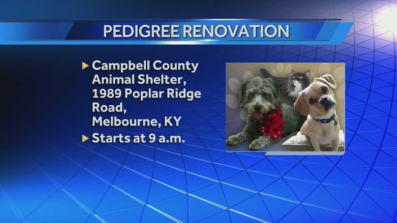 campbell co. animal shelter renovation.jpg