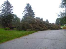 Tree down in Kennebunk.
