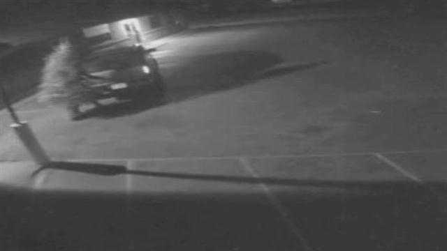 Surveillance video: Thief steals giving tree
