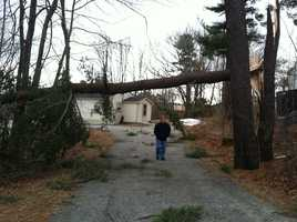 A pine tree knocked down power lines at 317 Washington Street in Bath.