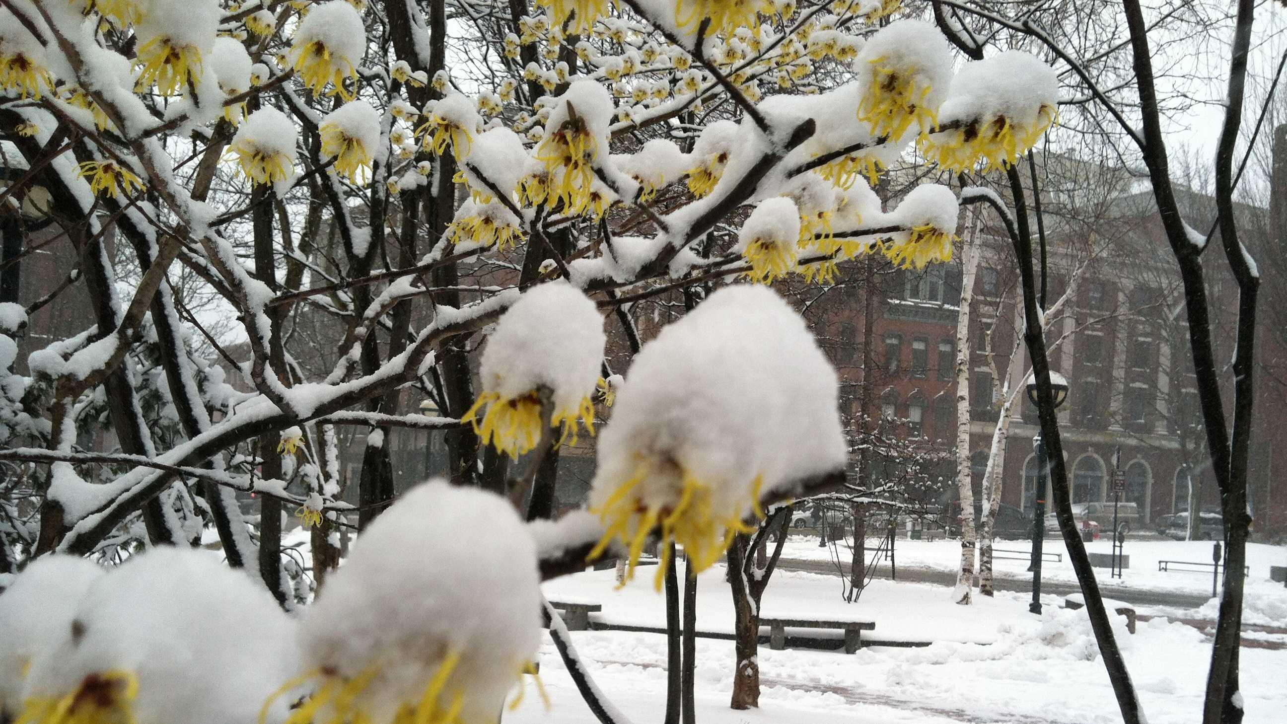 April Snow Media Window
