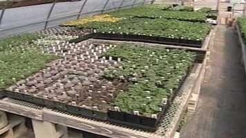 WMTW News 8's Norm Karkos takes a look at how to organize vegetables in your garden.