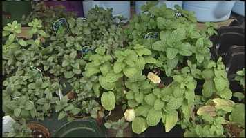 WMTW News 8's Norm Karkos talks about growing herbs in a planter.