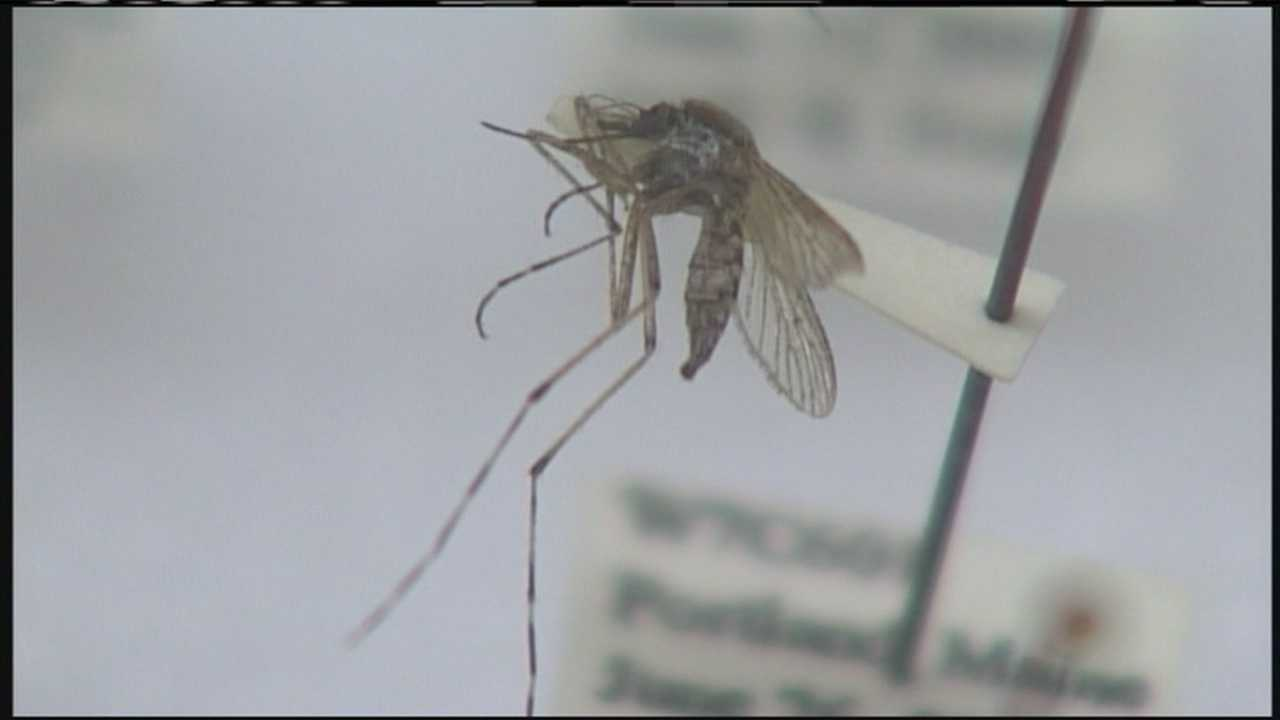Mosquitoes less likely to bite in cold temperatures