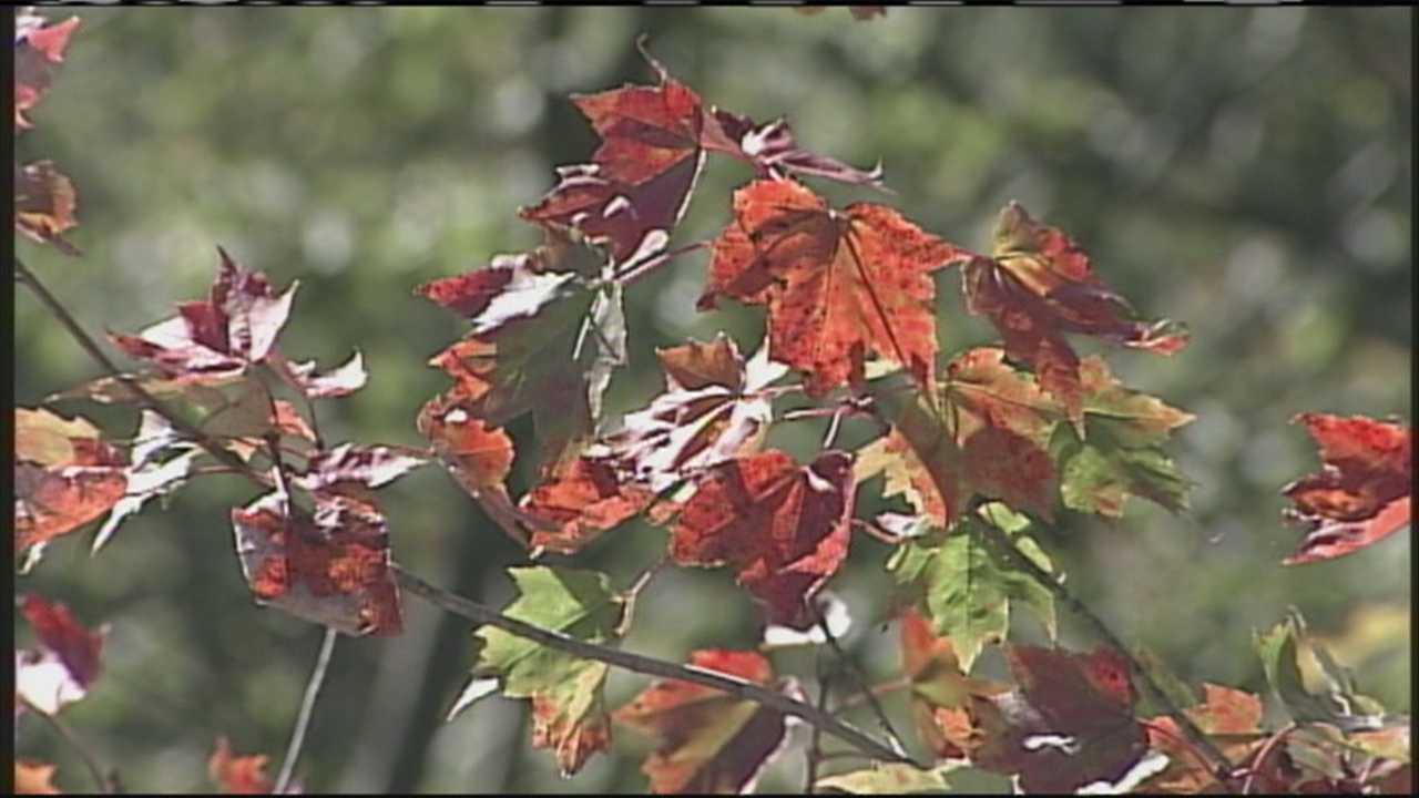 Maine's fall foliage report