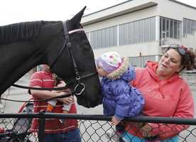Elizabeth Merrill Tewksbury marshaled Saturday's races with her retired Standardbred, Dreamy Starlet, who got some attention from a young fan.