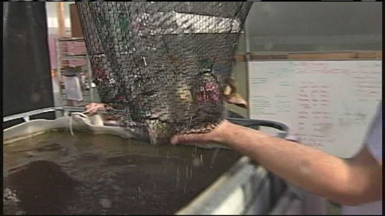 img-Tonight at 5 Farm turns to aquaponics movement