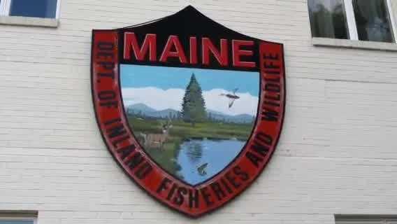 img-Maine deer population bouncing back