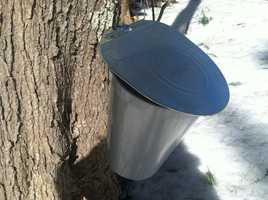 The cold weather is taking a toll on Maine maple syrup producers, with Maine Maple Sunday coming up this weekend.