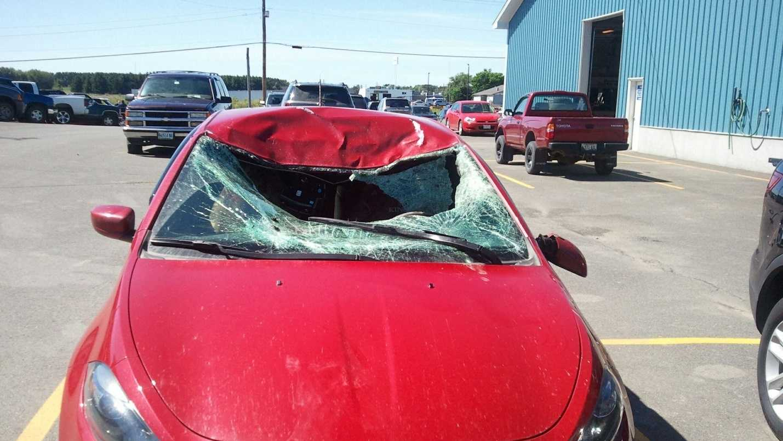 Moose Crash.jpg