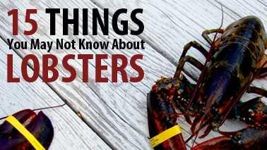 15-things-lobsters-mw.jpg