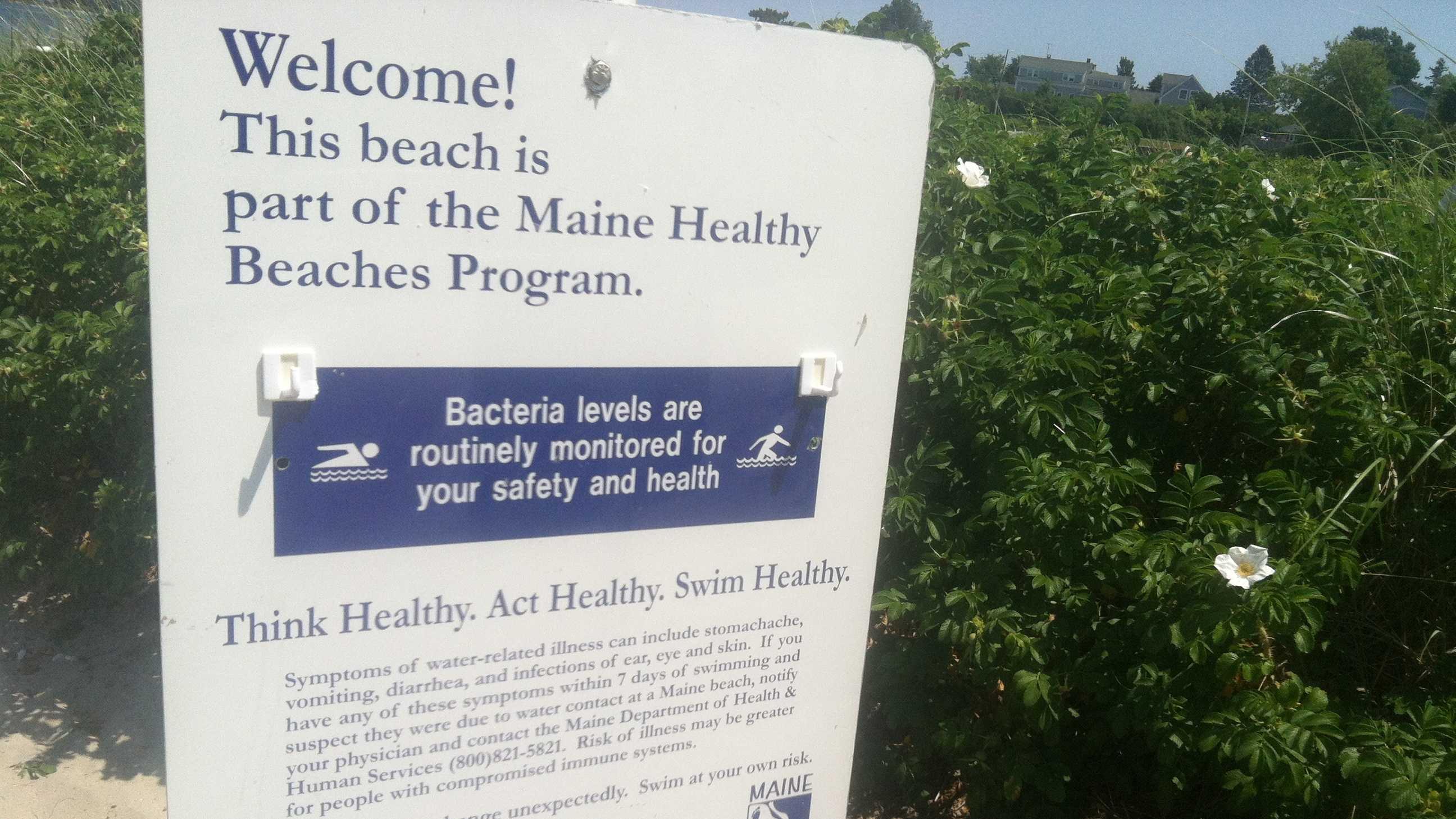 Beach Bacteria